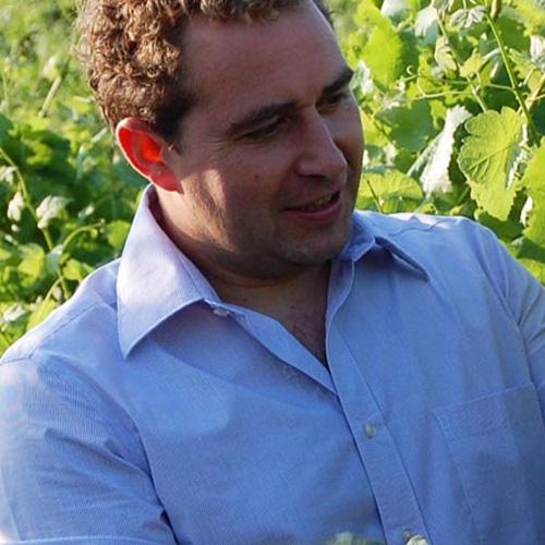 Laurent Miquel, Vigneron